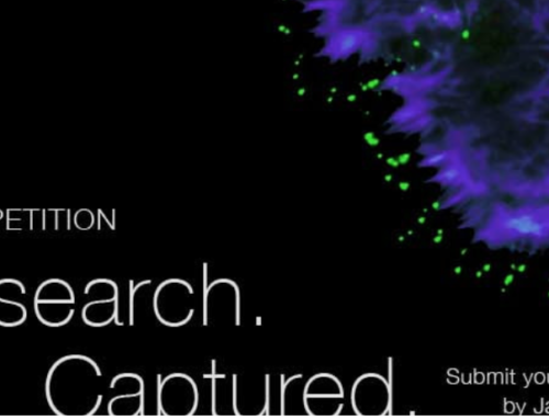 Euro-BioImaging launched an image/video competition